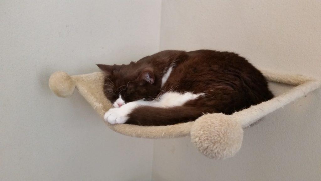 Kater Balou schläft in einem an der Wand befestigten Katzenkörbchen