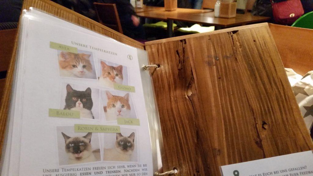 Auf der letzten Seite der Speisekarte werden die sechs Katzen vorgestellt