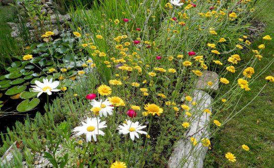 Naturgarten für Wildbienen