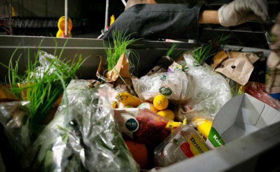 Eine Mülltonne voll mit frischem bunten BIO-Gemüse