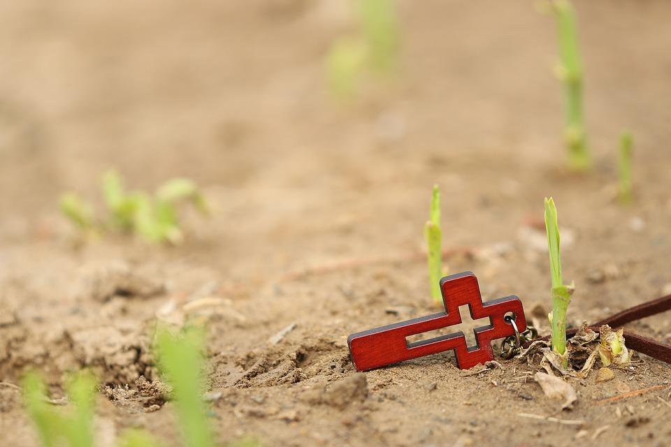 Bild zeigt ein Kreuz an der Wurzel des keimenden Weizenpflanze. Bildunterschrift: Glauben ist das Salz der Erde.
