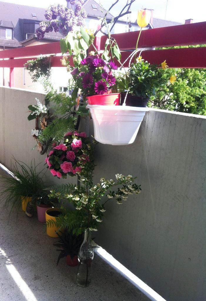 Auf Luises Balkon blüht es
