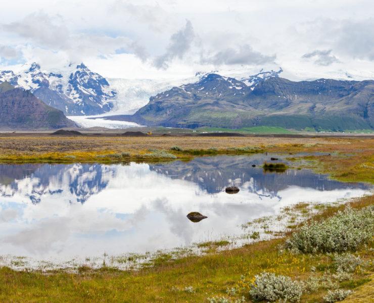 Panoramaaufnahme einer isländischen Landschaft, mit schneebedeckten Bergen und zwei Gletscherzungen im Hintergrund, im Vordergrund ein See in dem sich die Berglandschaft spiegelt, am Bildrand rechts zwei Pflanzenkissen und im Bildvordergrund gelblich-grünes Gras