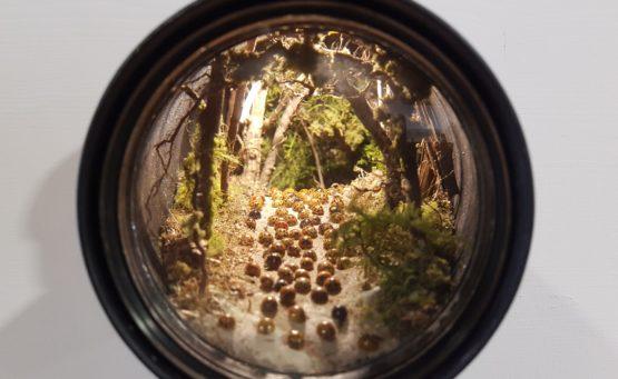 Küntlerprojekt Europa: Vergrößerungslupe zeigt Landschaftsausschnitt mit echten Marienkäfern, Zweigen und Moos - ein Beitrag von Carmen Weber