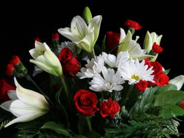 Strauß aus roten und weißen Blumen vor schwarzem Hintergrund