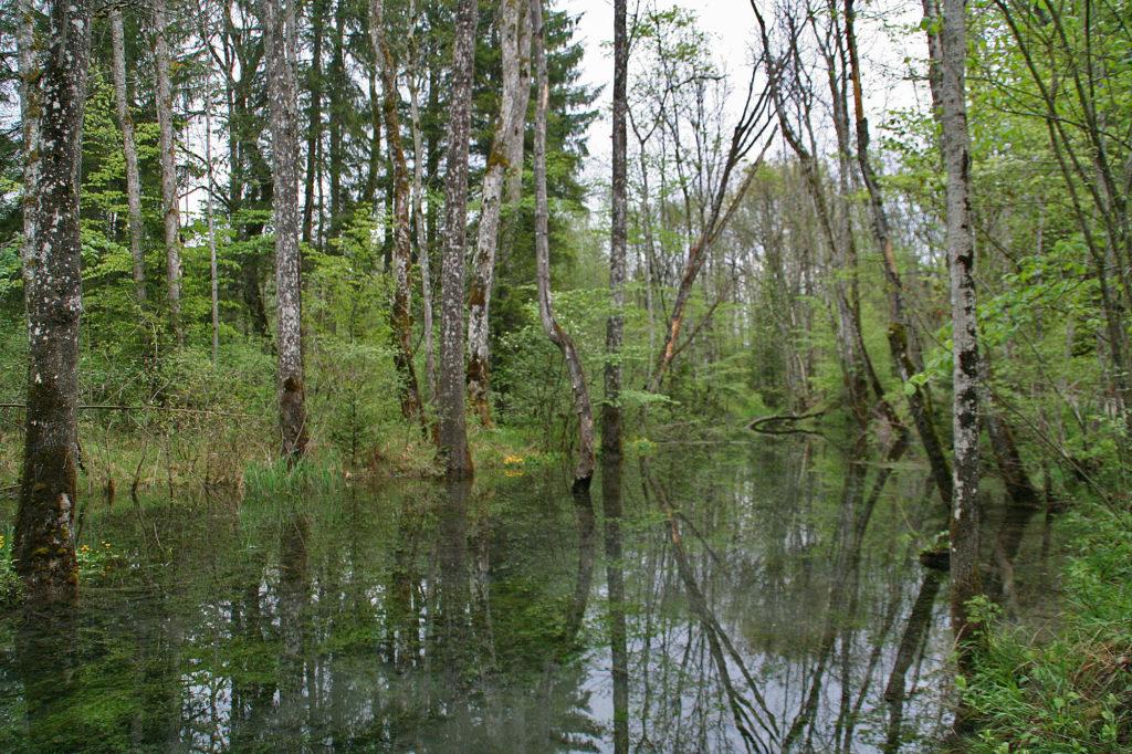 Biotop in den Isarauen